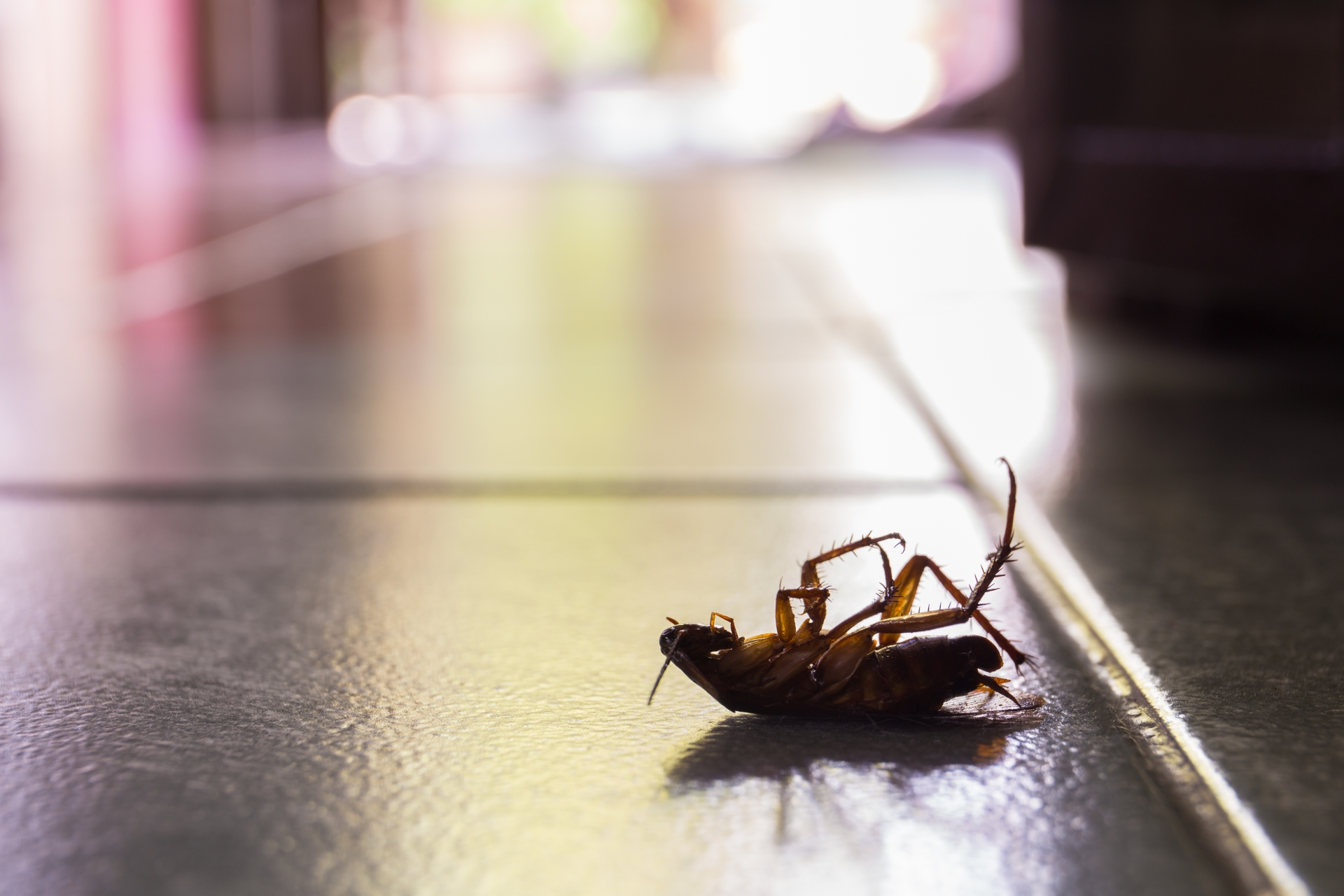 Cockroach Control, Pest Control in Moorgate, Liverpool Street, EC2. Call Now 020 8166 9746