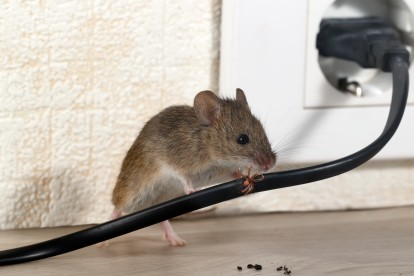 Pest Control in Moorgate, Liverpool Street, EC2. Call Now! 020 8166 9746