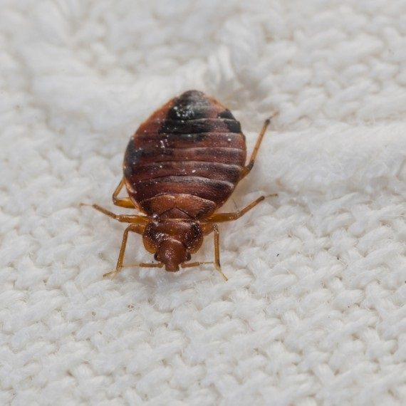 Bed Bugs, Pest Control in Moorgate, Liverpool Street, EC2. Call Now! 020 8166 9746