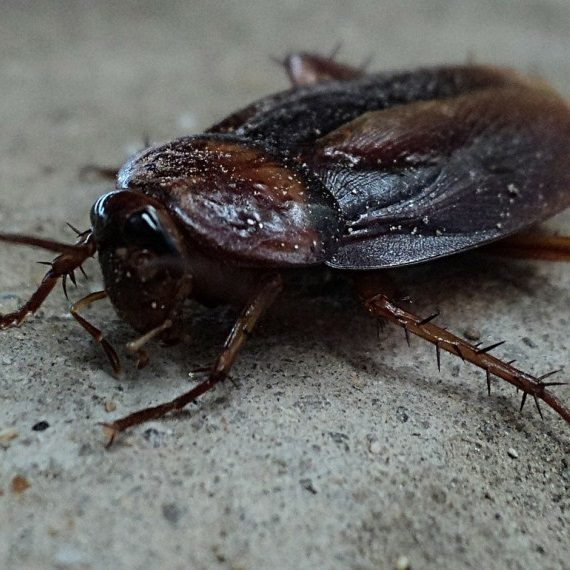 Cockroaches, Pest Control in Moorgate, Liverpool Street, EC2. Call Now! 020 8166 9746