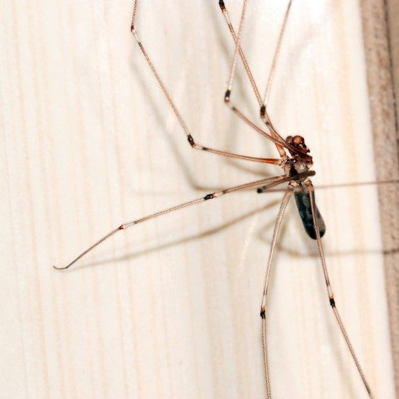 Spiders, Pest Control in Moorgate, Liverpool Street, EC2. Call Now! 020 8166 9746